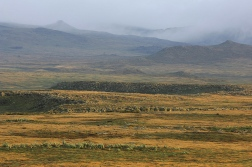 Bale Mountains by Vincent Munier